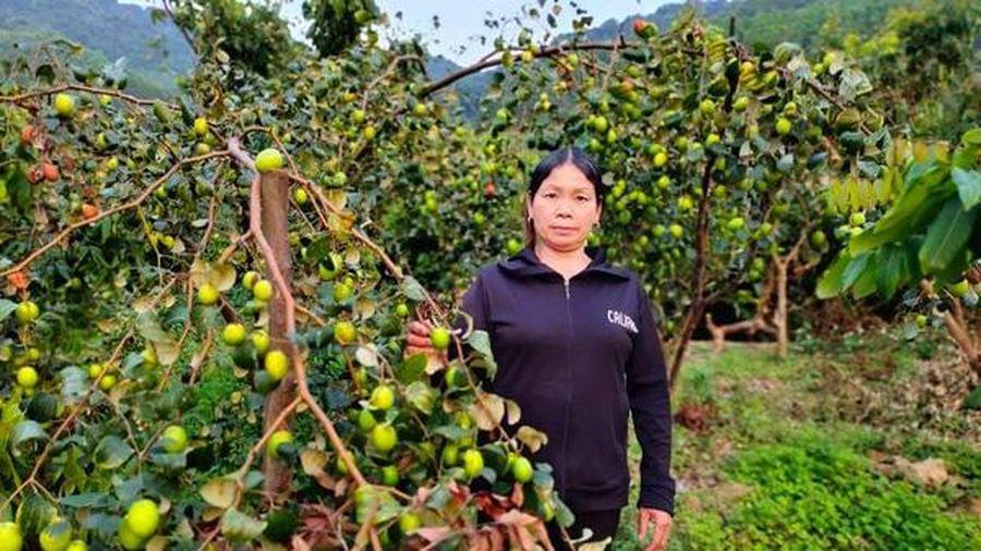 Từ giấc mơ đủ ăn đủ mặc trở thành bà chủ vườn cây ăn quả với thu nhập cao