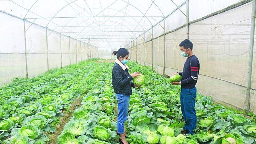 Sức sống mới trên quê hương Quảng Lưu