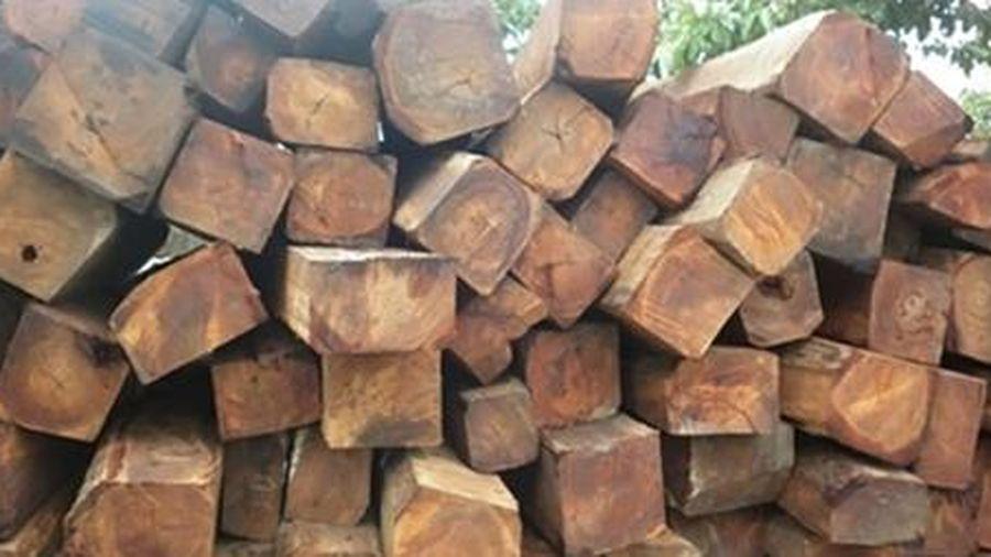 Truy tìm chủ sở hữu gỗ nhập khẩu từ châu Phi