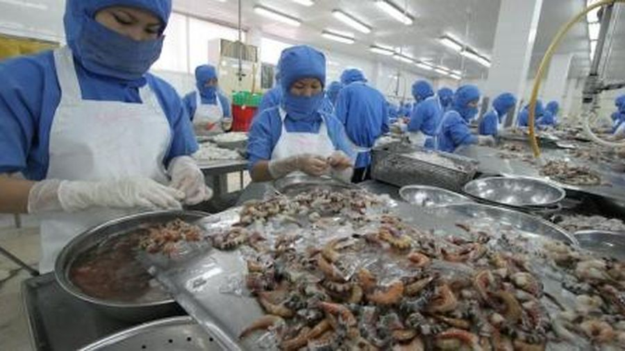 Quy định kiểm dịch các sản phẩm thủy sản chế biến từ động vật chưa phù hợp