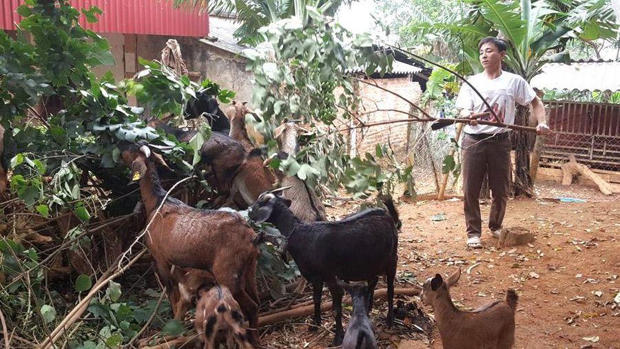 Phát huy mô hình giảm nghèo hiệu quả