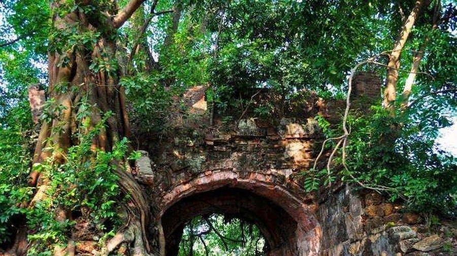 Hạn chế trồng cây lâu năm kích thước lớn trong khuôn viên thành cổ Sơn Tây