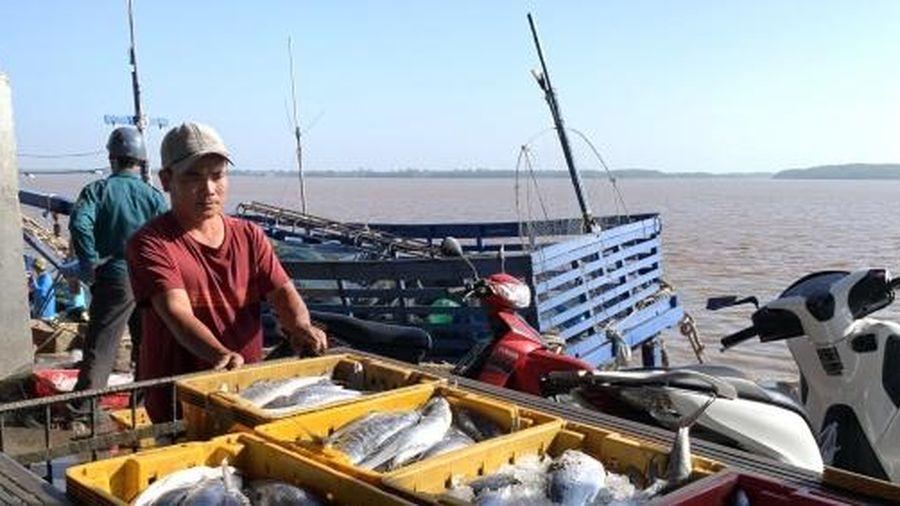 Ngư dân Cà Mau trúng lộc biển đầu năm
