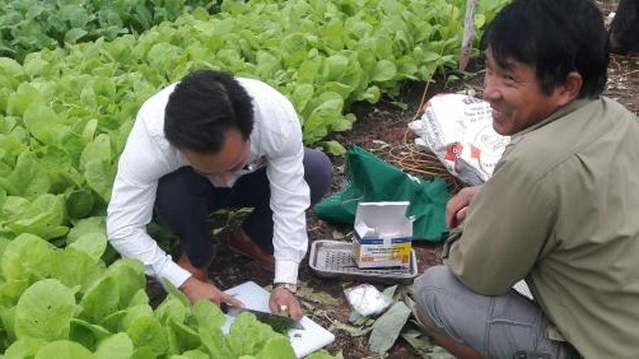 Khắc phục yếu tố dinh dưỡng hạn chế tăng sức khỏe đất trồng