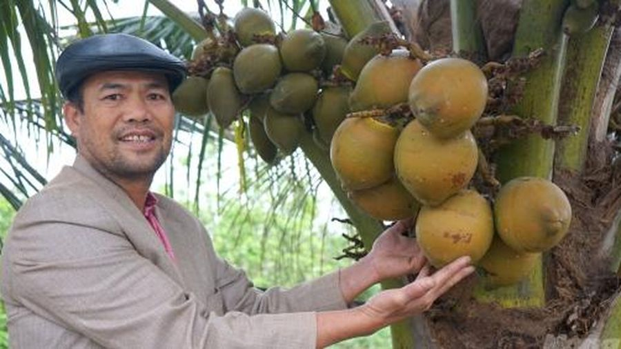 'Mãn nhãn' với 300 gốc dừa xiêm cho doanh thu 300 triệu đồng