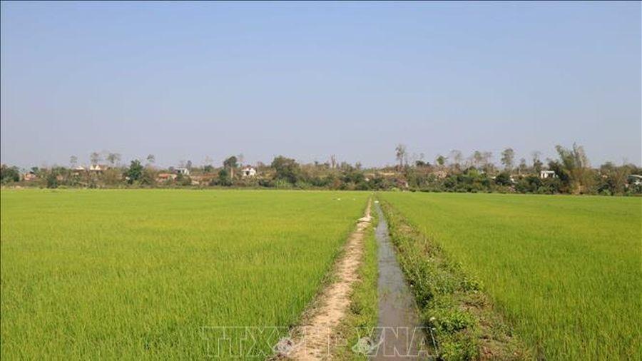 Đắk Nông: Thanh tra việc quản lý, sử dụng đất trồng lúa tại 2 huyện trọng điểm