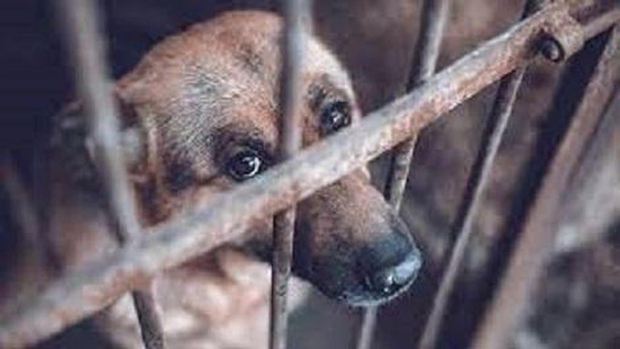 Phạt đến 3 triệu đồng hành vi đánh đập, hành hạ tàn nhẫn vật nuôi