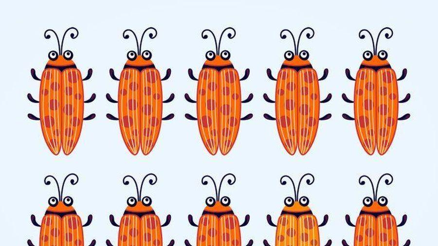 Đố vui: Con bọ nào khác những con còn lại?