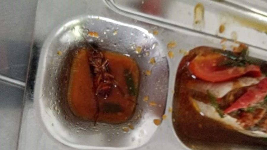 Học sinh ở TP.HCM phát hiện có gián trong suất ăn 27.000 đồng