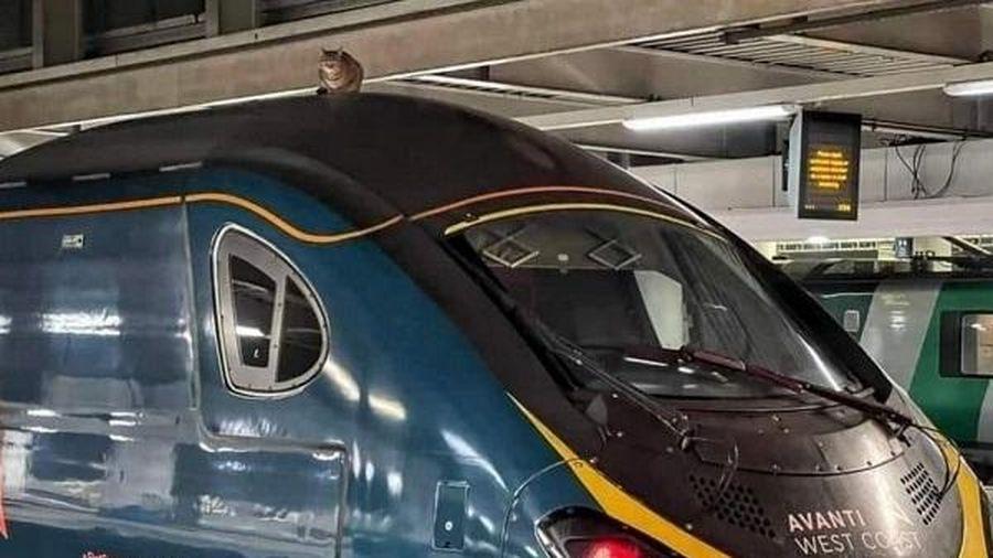 Tàu cao tốc ở London bị hoãn 2,5 tiếng vì một con mèo