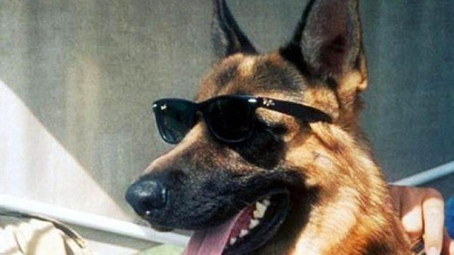 Câu chuyện kinh ngạc về 'gia tộc' chó giàu nhất thế giới