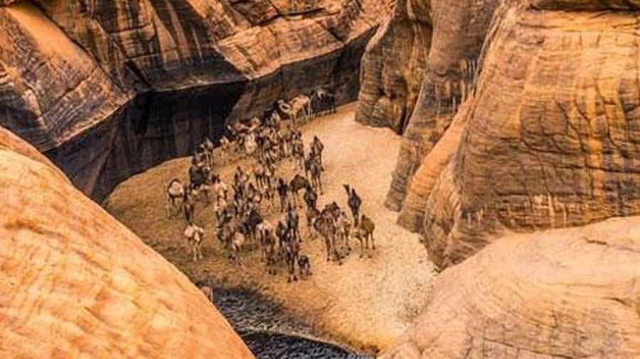 'Khách sạn' của lạc đà giữa sa mạc Sahara
