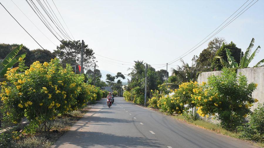 Rực rỡ những con đường hoa nông thôn