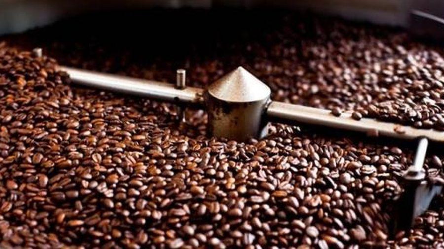 Giá cà phê hôm nay 6/3: Giảm nhẹ 100 - 200 đồng