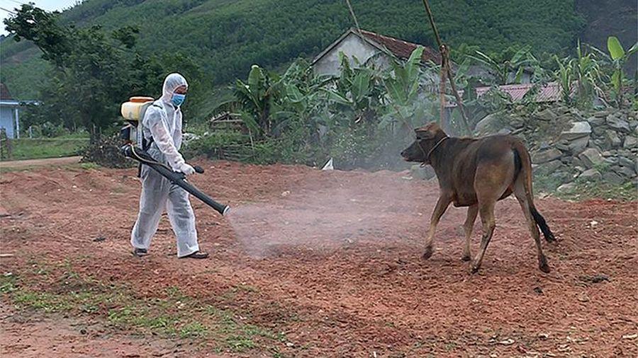 Phòng, chống dịch bệnh trên cây trồng, vật nuôi