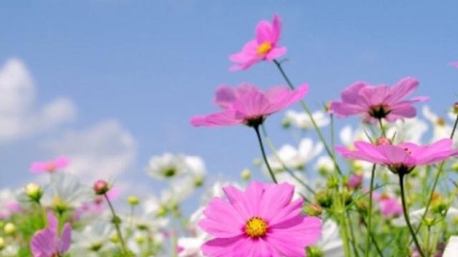 Học cách cắm hoa cánh bướm của cô giáo Hà thành