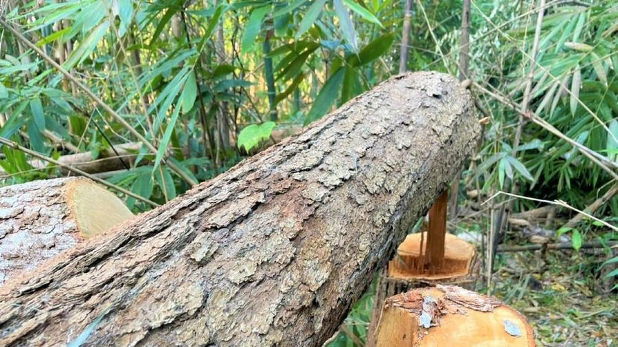 Hơn 400 vụ vi phạm lâm luật, Đắk Nông dẫn đầu Tây Nguyên về phá rừng