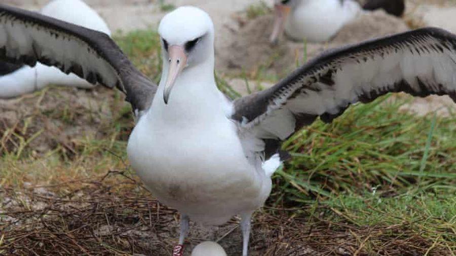 Con chim 70 tuổi già nhất thế giới vừa đón hậu duệ mới
