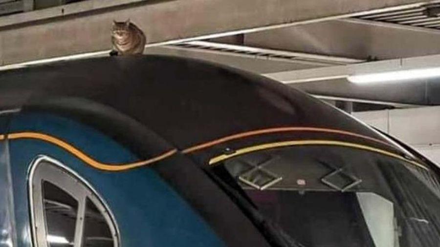 Tàu điện ngầm hoãn giờ chạy vì mèo lên nóc tàu nằm ngủ