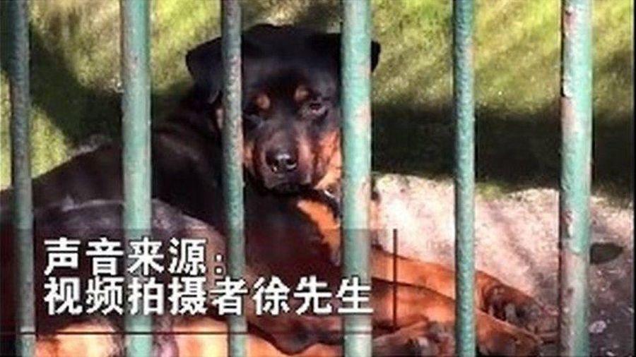 Con 'sói lạ' trong sở thú ở Trung Quốc