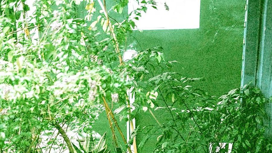 Vườn trong nhà