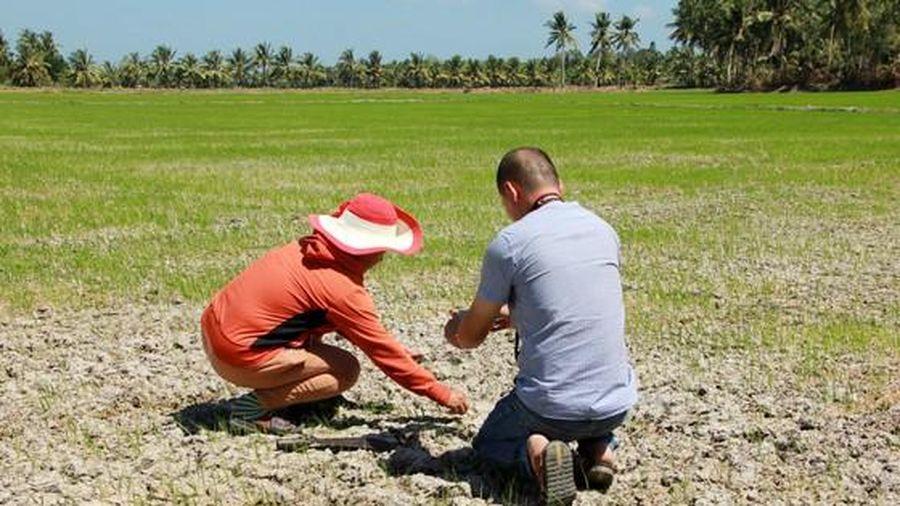 ĐBSCL: Hạn mặn tăng cao từ giữa tháng 3