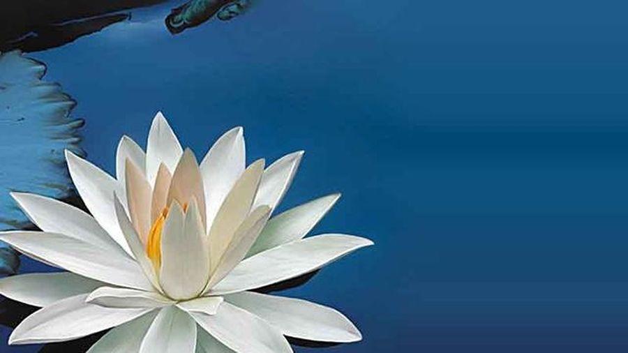 4 câu nói giúp bạn bình an suốt đời
