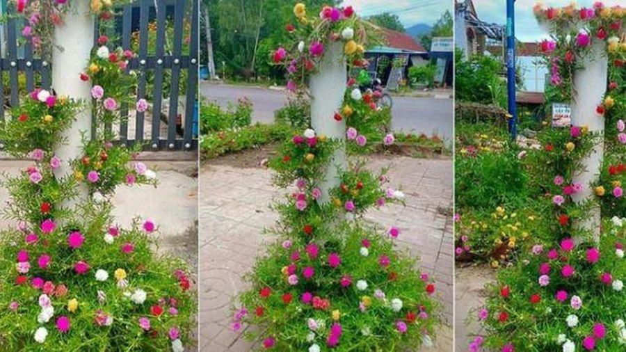 Hoa mười giờ thì chẳng lạ gì, nhưng chỉ cần biến tấu một chút đảm bảo góc vườn của bạn sẽ vô cùng độc đáo, ai nhìn cũng mê!