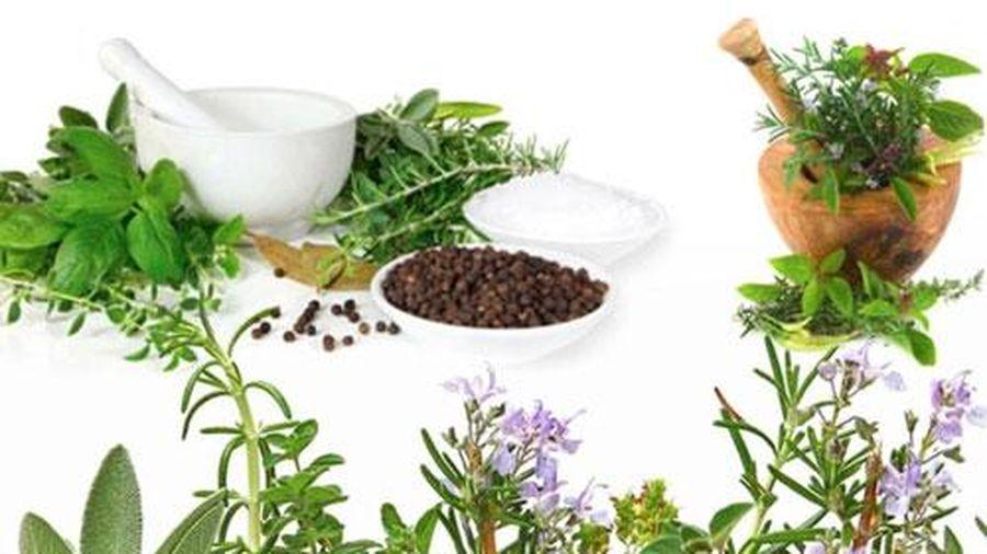 Những bài thuốc nam hỗ trợ chữa viêm dạ dày hiệu quả