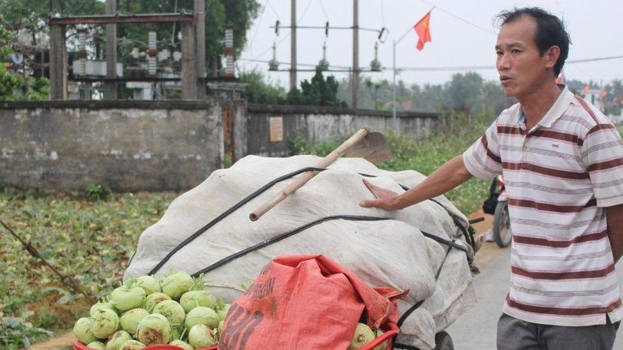 Nghệ An: Nông dân khóc ròng vì 'tắc' đầu ra cho nông sản