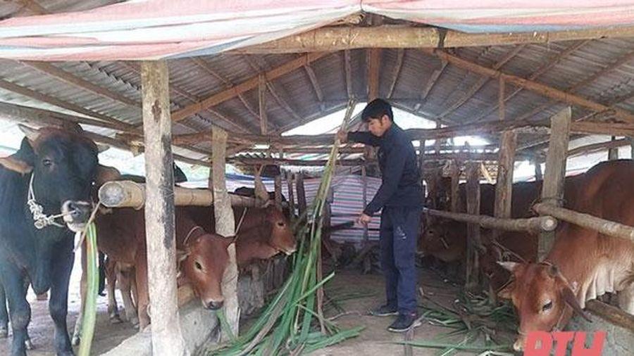 Gương thanh niên vượt khó ở làng Đô Sơn
