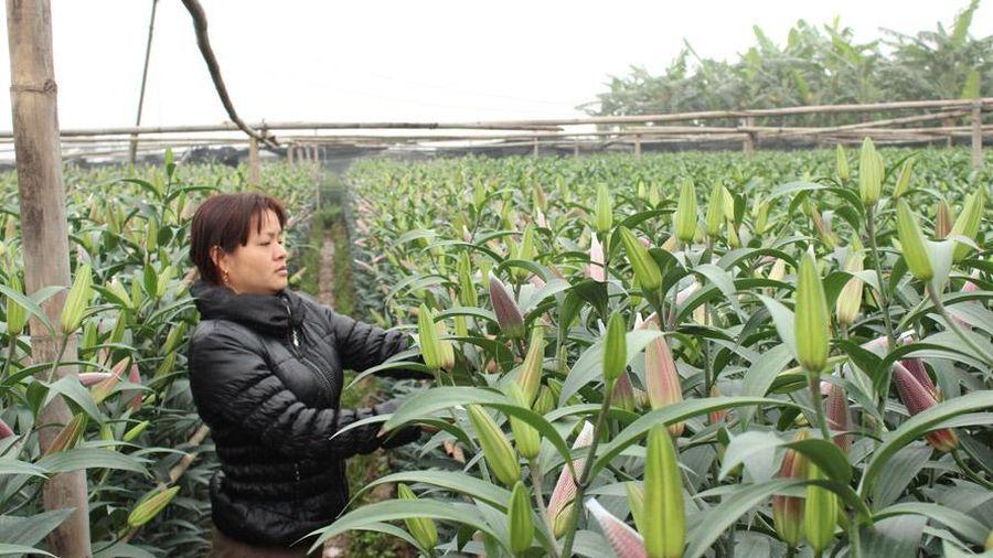 Thị trường hoa 8-3: Nguồn cung dồi dào, giá tại chợ đầu mối tăng cao
