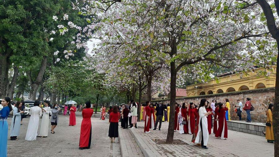 {Ảnh} Ngày 8/3: Áo dài chụp ảnh với hoa ban