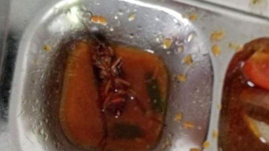 Gián xuất hiện trong bữa ăn trường học ở TP.HCM: Kiểm tra nhà bếp