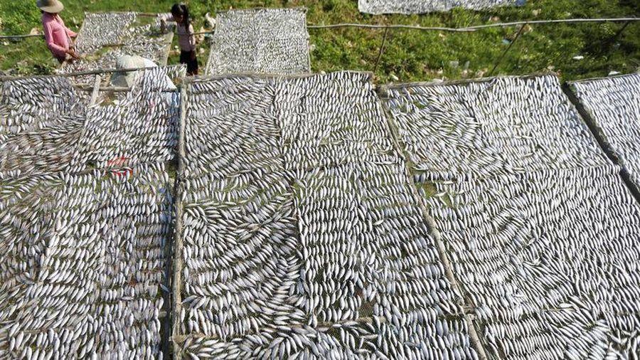 Ngư dân Campuchia khốn đốn vì sản lượng cá giảm mạnh