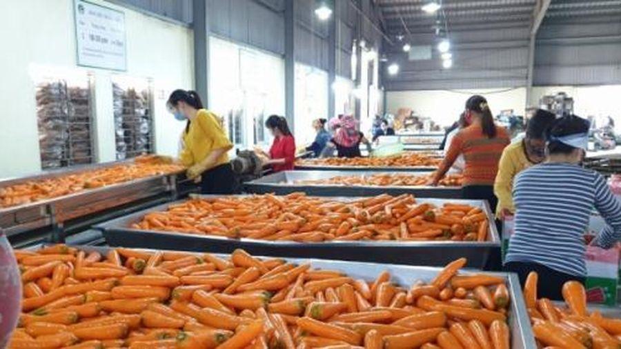 Hải Phòng sắp có nhà máy chế biến nông sản gần 500 tỷ đồng