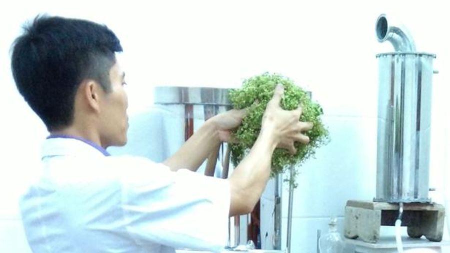 Thực vật họ sim ở Hà Tĩnh chứa hợp chất diệt khuẩn, có tiềm năng chống ung thư