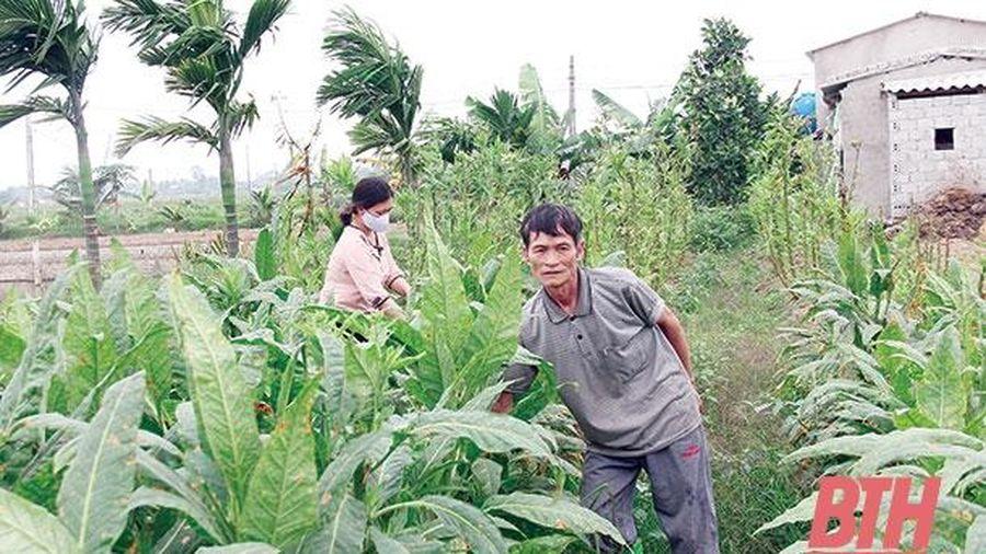 Ngành nông nghiệp phấn đấu đạt tốc độ tăng trưởng năm 2021