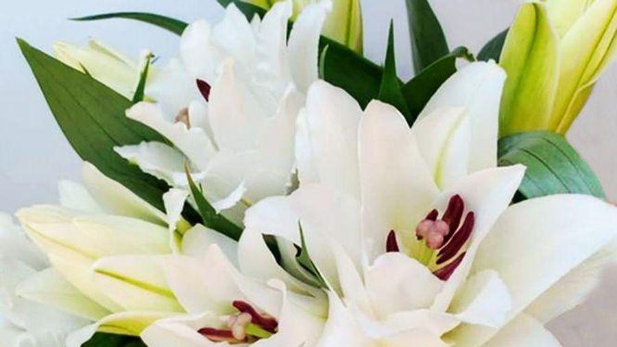 Hoa ly trắng mang ý nghĩa gì?