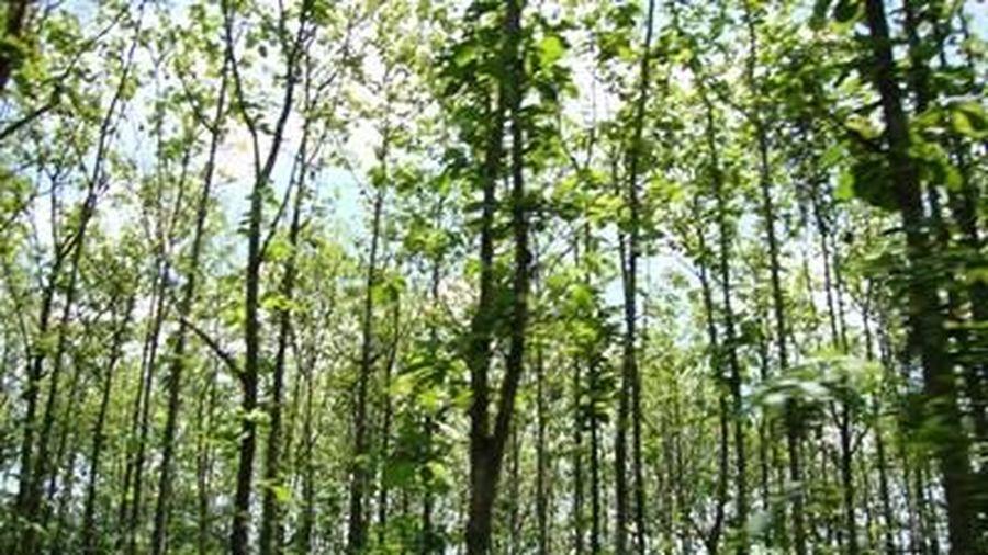 Các tỉnh phía Nam tập trung phòng chống cháy rừng