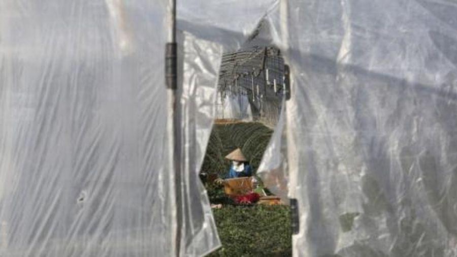 Lao động nhập cư và góc khuất trong cuộc sống tại các trang trại Hàn Quốc