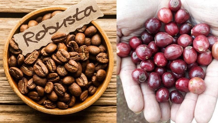 Giá cà phê hôm nay 9/3: Cà phê đồng loạt giảm sâu gần 50 USD/tấn, giới đầu cơ vẫn định hình thị trường