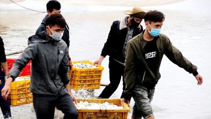 Ngư dân Hà Tĩnh thu cả trăm triệu đồng mỗi chuyến ra khơi 'săn' cá đù