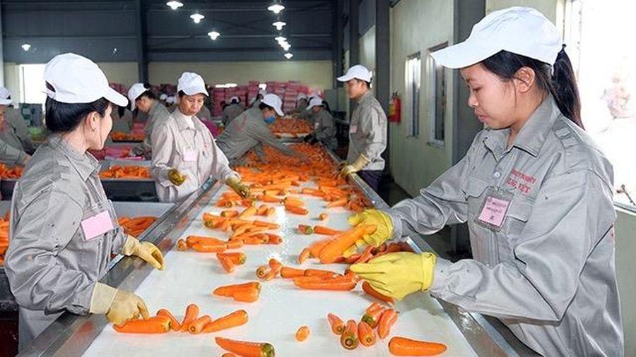 Hải Phòng: Công ty Hiền Lê đầu tư hơn 430 tỷ đồng vào dự án chế biến nông sản công nghệ cao