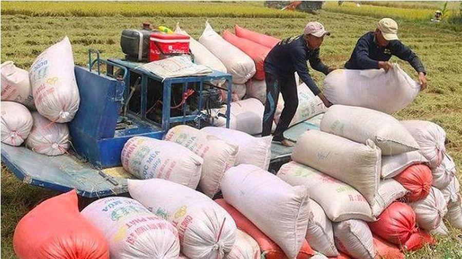 Thủ tướng chỉ đạo nghiên cứu thông tin trên báo chí về xuất khẩu gạo