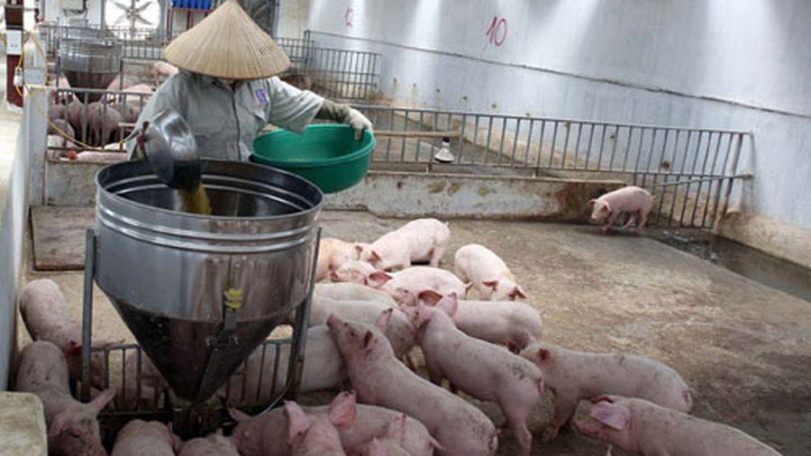 Sử dụng chất cấm trong chăn nuôi sẽ bị phạt đến 80 triệu đồng