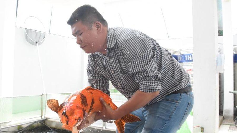 Khát vọng chinh phục cá Koi