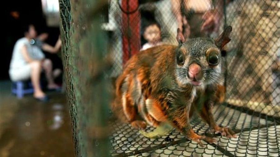 WHO kêu gọi cấm buôn bán động vật hoang dã còn sống