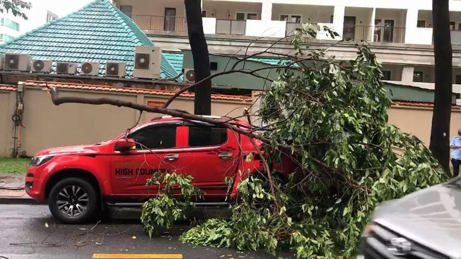 Cây xanh tét nhánh rơi trúng xe ô ô trong mưa lớn ở quận 1