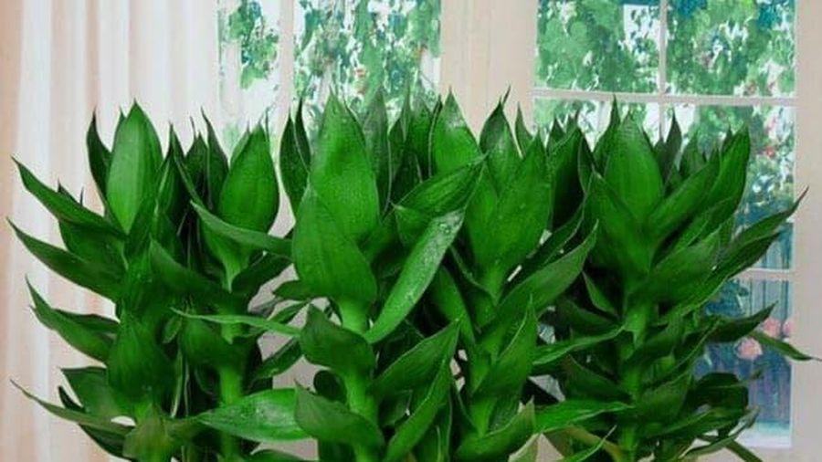 5 loại cây nên đặt cạnh bàn thờ Thần Tài để hút tài lộc